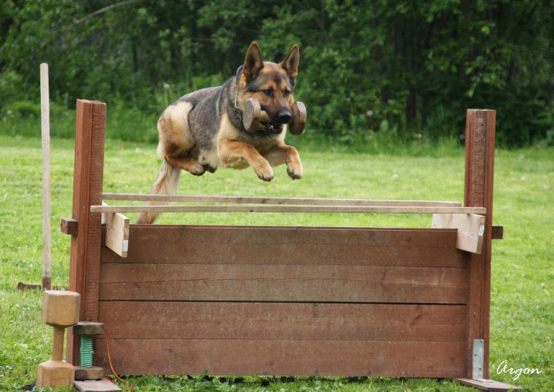 Преимущества индивидуальной дрессировки собак
